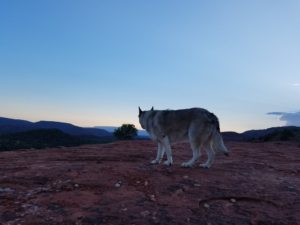 Sedona Vortex Adventures: Spiritual Animal the Wolf